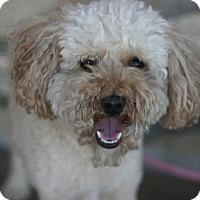 Adopt A Pet :: Donut - Canoga Park, CA