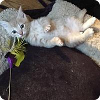 Adopt A Pet :: Rory - Cranford/Rartian, NJ
