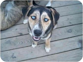 Husky Mix Dog for adoption in Jacksonville, North Carolina - Miley