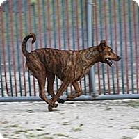 Adopt A Pet :: Louise - Pompano Beach, FL