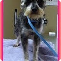Adopt A Pet :: Victoria - Staunton, VA