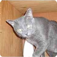 Adopt A Pet :: Claire - Hamburg, NY