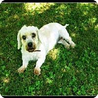 Adopt A Pet :: Ginger - Bryan, TX