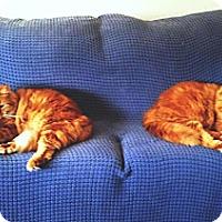 Adopt A Pet :: Moonraiser&Oscar - Laguna Woods, CA