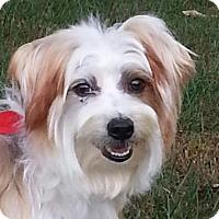 Adopt A Pet :: Kyser - Brattleboro, VT