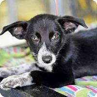 Adopt A Pet :: Wrangler - Bedminster, NJ