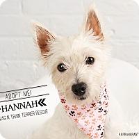 Adopt A Pet :: Hannah - Omaha, NE