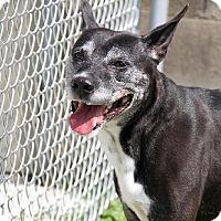 Adopt A Pet :: Pogo - Vienna, OH