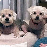 Adopt A Pet :: McGregor - Columbus, OH