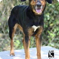 Adopt A Pet :: LEA - Tomball, TX