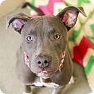 Adopt A Pet :: Winona