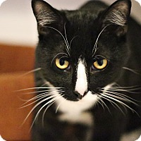 Adopt A Pet :: Emerson - Lincoln, NE