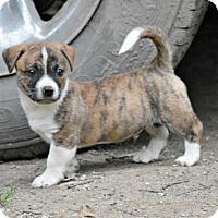 Adopt A Pet :: Jordan~adopted! - Glastonbury, CT
