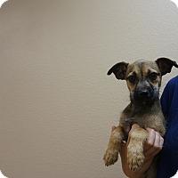Adopt A Pet :: Bitty - Oviedo, FL