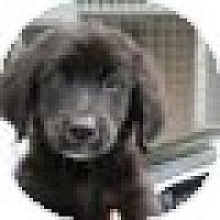 Adopt A Pet :: Ricky - Denver, CO
