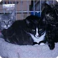 Adopt A Pet :: Gracie - Washington Terrace, UT