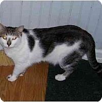 Adopt A Pet :: Kit Kat - Odenton, MD