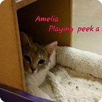 Adopt A Pet :: Amelia - McDonough, GA