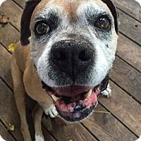 Adopt A Pet :: Camden - Richmond, VA