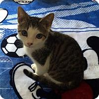Adopt A Pet :: Pickles - Monroe, NC