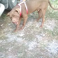 Adopt A Pet :: Freedom - Staunton, VA