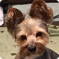 Adopt A Pet :: Burton - McKinney, TX