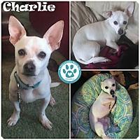 Adopt A Pet :: Charlie - Kimberton, PA