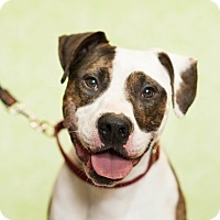 Adopt A Pet :: Blade - Red Wing, MN