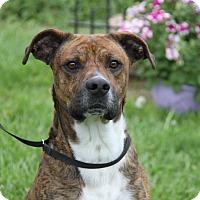 Adopt A Pet :: Diesel - Marietta, OH