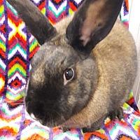 Adopt A Pet :: Cherry Blossom - Erie, PA
