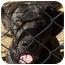 Photo 3 - Labrador Retriever/Terrier (Unknown Type, Medium) Mix Dog for adoption in Spartanburg, South Carolina - Sissy