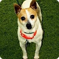 Adopt A Pet :: Preston - Mission Viejo, CA