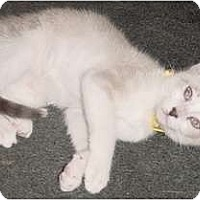 Adopt A Pet :: Koda - Franklin, NC