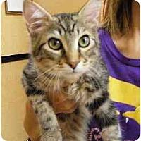 Adopt A Pet :: Fuzzy - Woodstock, GA
