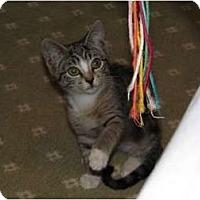 Adopt A Pet :: Stormy - Wakinsville, GA