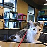 Adopt A Pet :: Chanel & Chantal - Scottsdale, AZ