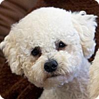 Adopt A Pet :: Remy - La Costa, CA