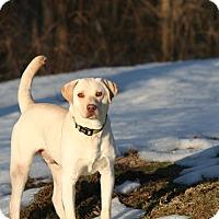 Adopt A Pet :: Tippy - Poughkeepsie, NY