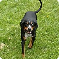 Australian Shepherd Mix Dog for adoption in Bakersville, North Carolina - Debbie