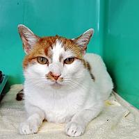 Adopt A Pet :: Gaston - West Hartford, CT