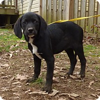 Adopt A Pet :: Pixie - Bedminster, NJ