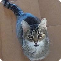 Adopt A Pet :: Patty - Acme, MI