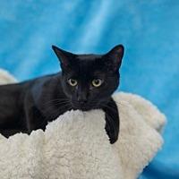 Adopt A Pet :: Slim - Woodland Hills, CA