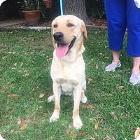 Adopt A Pet :: Buddy - Jay, NY