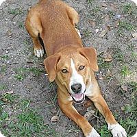 Adopt A Pet :: Charles - Ormond Beach, FL