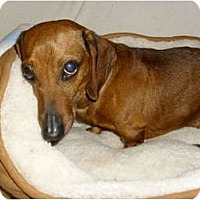 Adopt A Pet :: Brooklyn - Lawndale, NC