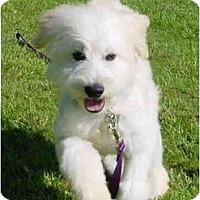 Adopt A Pet :: Skipper - La Costa, CA