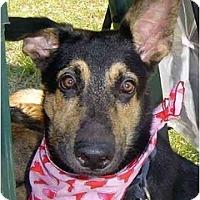 Adopt A Pet :: Mitchell - Pike Road, AL