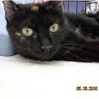 Adopt A Pet :: Angelina - Riverside, RI