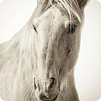 Adopt A Pet :: Texas Jack - El Dorado Hills, CA